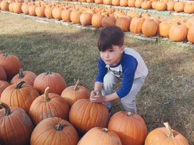 Picking out 15 pumpkins is HARD WORK (when you're five).